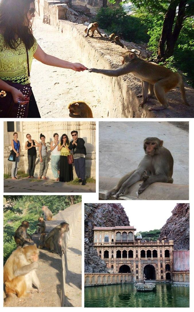 monkey-temple-japa-viajante-india-fernanda-toyomoto